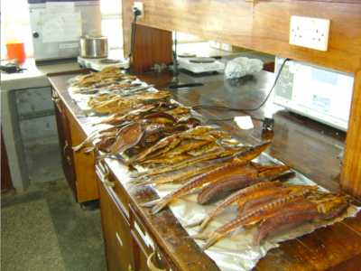 Smoked and solar dried fish products before being taken for the exhibition